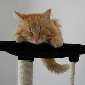 pension les chats d 39 oc proche toulouse villefranche 31 et castelnaudary 11. Black Bedroom Furniture Sets. Home Design Ideas